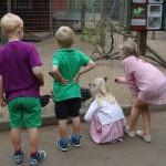 Barn som matar hönsen i Hembygdsparken, Ängelholm