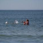 Badliv och stränder på Bjärehalvön