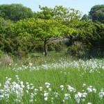 Vacker grönska vid Gröthögarna på Bärehalvön