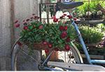 cykel på bäckdalen_rek